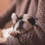 What is Dog Breeder?