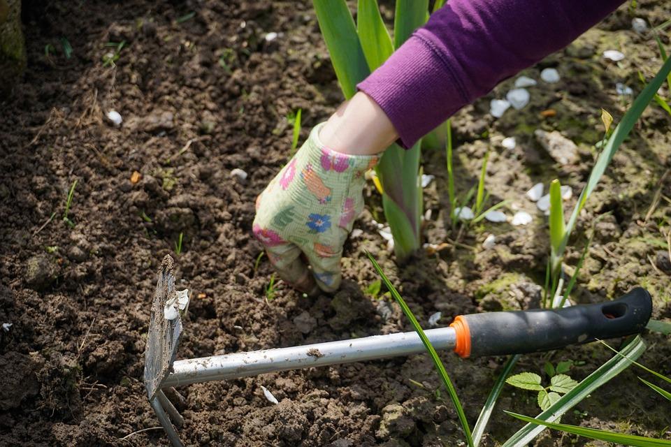 work-in-the-garden-2432111_960_720