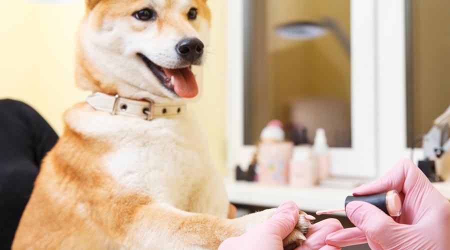 Pet-Spa-Services