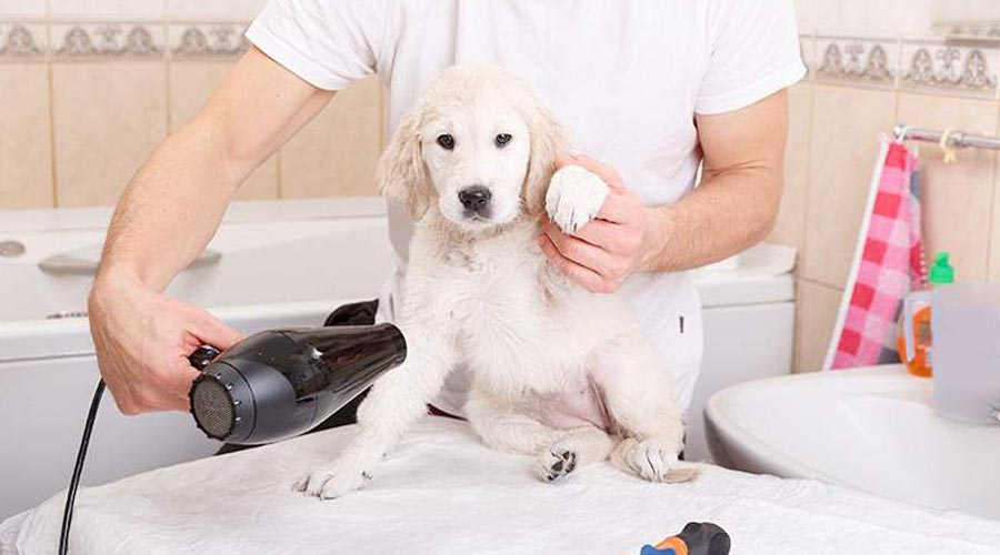 Top-Trends-in-Multi-Family-Amenities-The-Pet-Spa copy