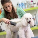 What does a pet groomer do?