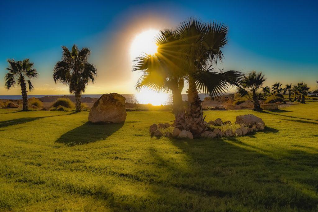 Landscaping Garden Rocks Palm Trees Landscape